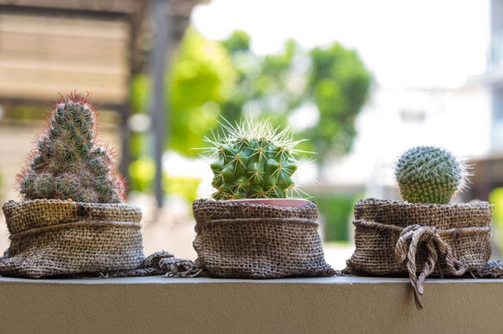 donde-colocar-los-cactus-3