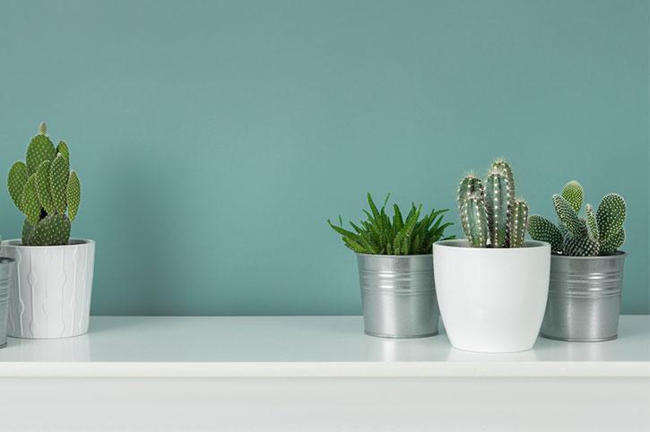 donde-colocar-los-cactus-4